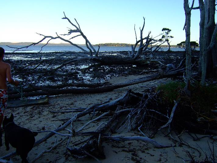 Coochie_Island_silvester 004.jpg